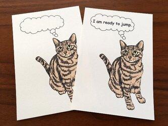 ジャンプ直前猫*2枚組の画像