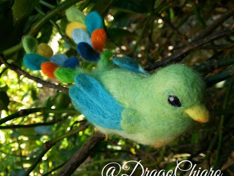 春呼鳥 ファヴォヌの画像