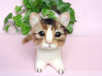 三毛猫ちゃんの画像