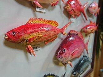 鯛の仲間の画像