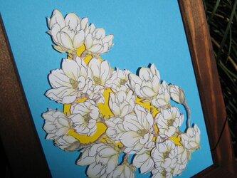2L型額縁入り【白木蓮】無地カード with 青色&黄色背景の画像