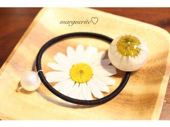 押し花マーガレットのまん丸ヘアゴムの画像