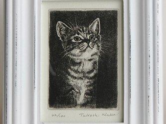 見上げる子猫・A/2004(額あり)の画像