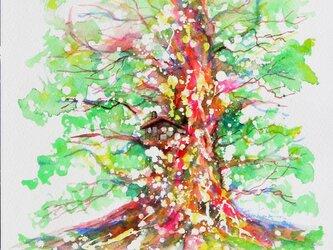 千年樹(楽しき我が家)の画像