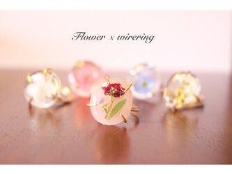 水たまりお花リング・ミルキーピンク(アリッサム)の画像