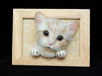 【癒し子猫 大きめフレーム 1 】の画像