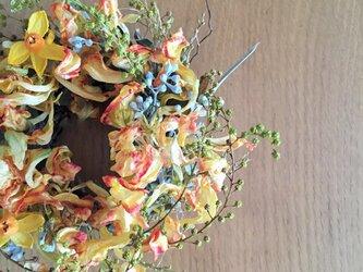早春のなごりリース モンテカルロチューリップ 早春のお花を束ねたようにの画像