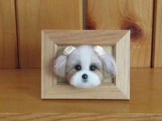 シーズー犬 フレーム の画像