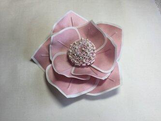 白い縁取りピンクの薔薇の画像