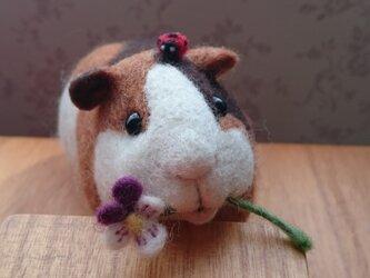 羊毛フェルト モルモットのお人形の画像