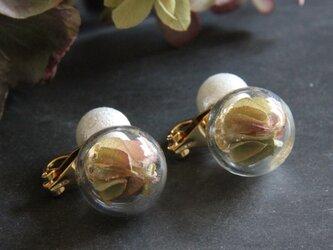 ビー玉模様のイヤリングの画像