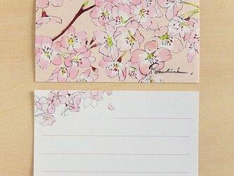 ミニカード 桜の画像