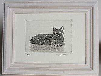 くつろぐ猫 / 銅版画 (額あり)の画像