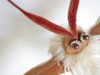蝶のキャラメルちゃんの画像