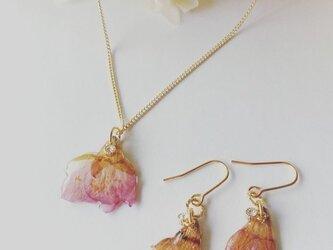 本物のお花 桜のネックレス、ピアスセット(イヤリング可)の画像