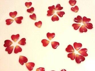 バラの花びらパーツの画像
