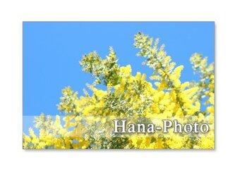 1224 ミモザの季節     ポストカード5枚組の画像