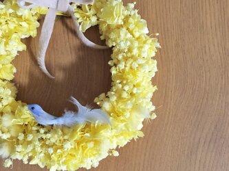 春色リース ふんわり黄色いカスミソウ 青い鳥は取り外しOKの画像