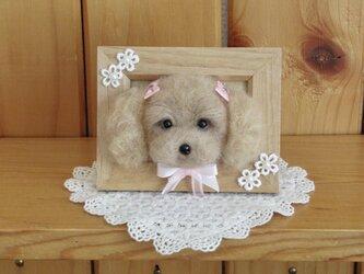 トイプードル 犬 フレーム の画像