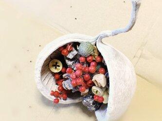 Dry materials ・ナチュラルミックス In ブッダナッツの画像