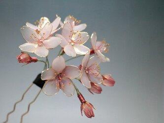 桜の簪(かんざし)  -光降る朝-の画像
