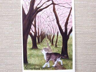 「桜舞う道に猫」(お好きなポストカード2枚)の画像