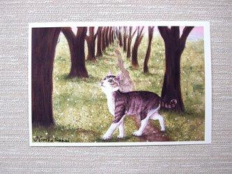 「桜舞う道に猫」<ねこ>(お好きなポストカード2枚)の画像