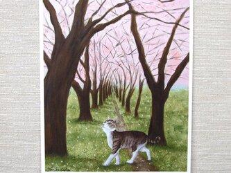 A4サイズ複製 「桜舞う道に猫」の画像