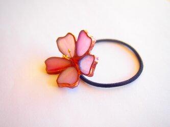 桜のヘアゴムの画像