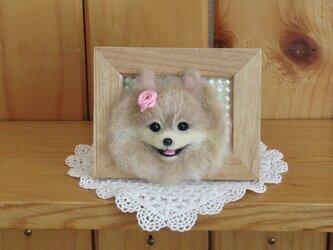 ポメラニアン 犬 フレーム の画像