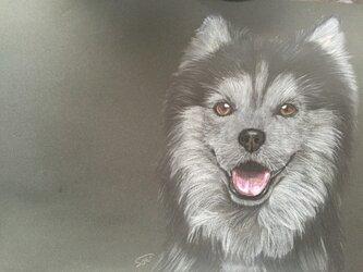 絵画【犬】の画像