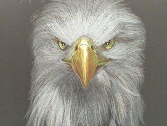 絵画【鷹】の画像