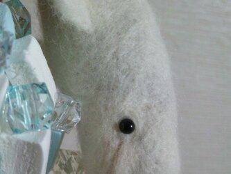 白イルカ(ベルーガ)の画像