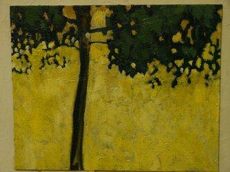 背後に日光を浴びる木の画像