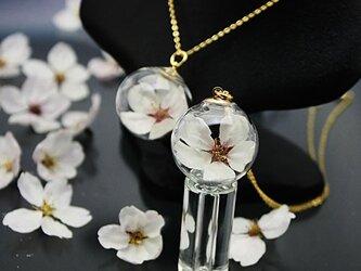 Flower glass Ball Pendant ~桜~の画像