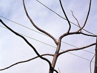 スチル・ライフ - Tree -の画像