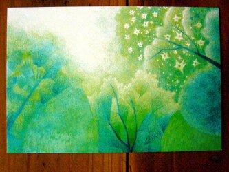 色鉛筆画ポストカード4種/夏の画像