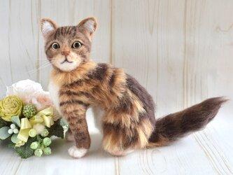 羊毛フェルト 猫 メインクーンの画像
