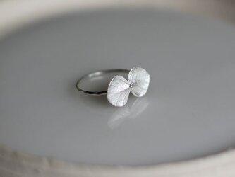 sv925 ユーカリのリングの画像