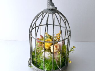 Flower in a cageの画像