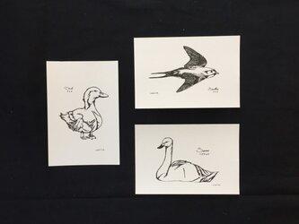 鳥-ツバメ・アヒル・ハクチョウ-の画像