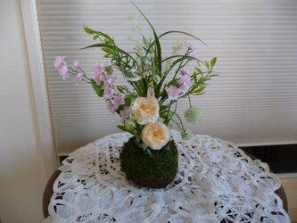 野草花の画像