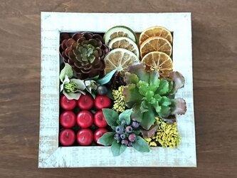 フレームサラダの画像