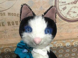 ハチワレ猫(青い目)の画像