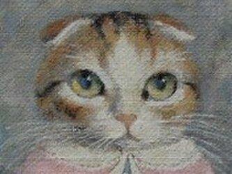 スコティッシュフォールド・ピンクのカーディガンの画像
