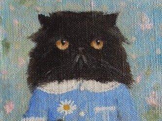 ペルシャ・ブラック・マーガレットの画像