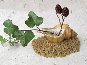 ✨くるみ工房✨漆塗り 日本海流木・貝殻一輪挿しの画像