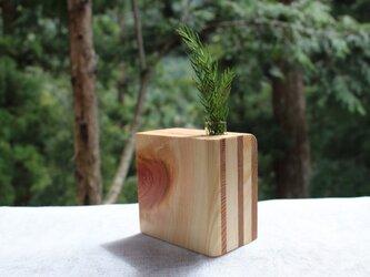 白い犬 杉と桧の一輪挿し №.2の画像