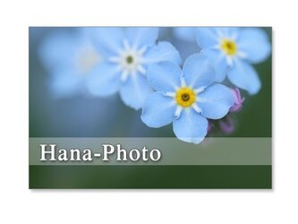 1233)スズランと勿忘草      ポストカード5枚組 の画像