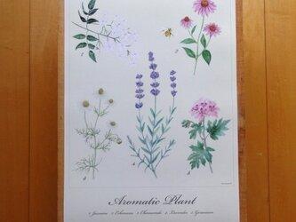 Aromatic Plant Posterの画像